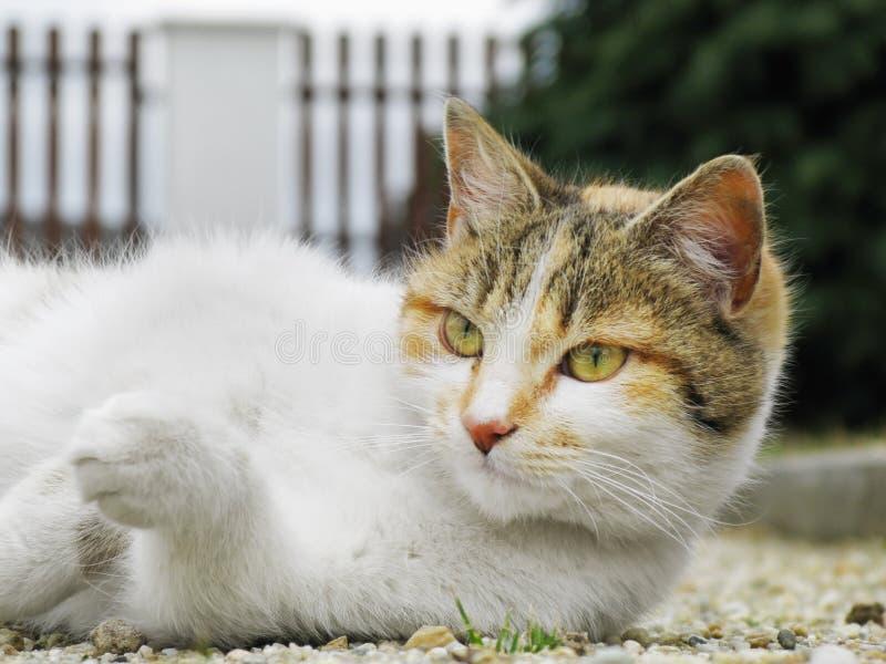 Η γάτα βρίσκεται στο αμμοχάλικο στοκ φωτογραφία