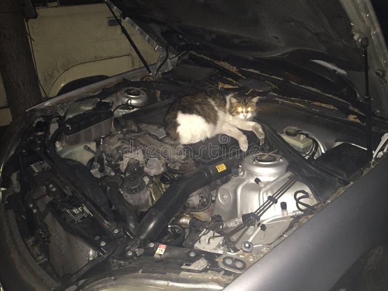 Η γάτα είναι κρύα στοκ φωτογραφίες