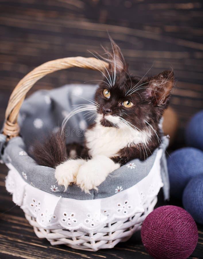 Η γάτα είναι στο συρτάρι στοκ φωτογραφία με δικαίωμα ελεύθερης χρήσης
