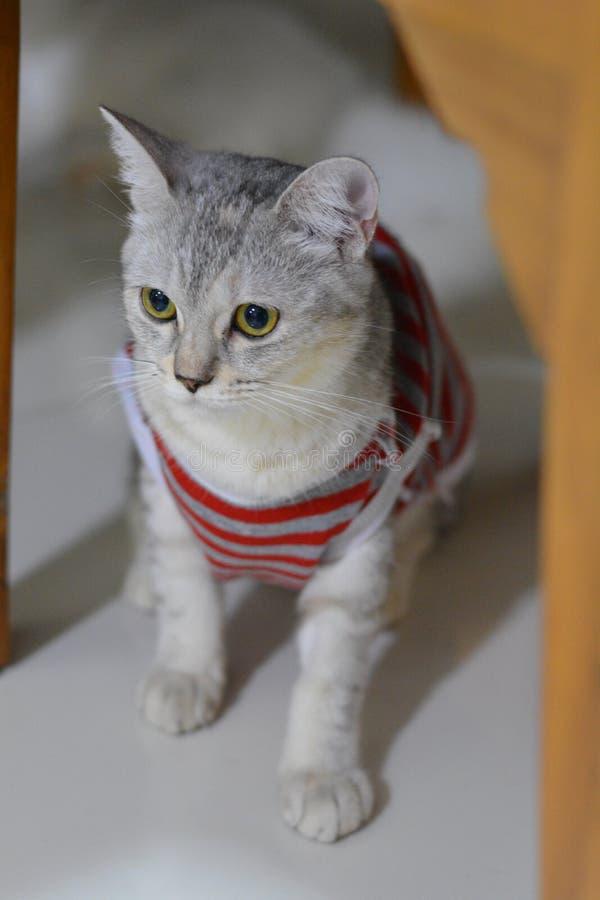 Η γάτα εξετάζει το στοκ φωτογραφία με δικαίωμα ελεύθερης χρήσης