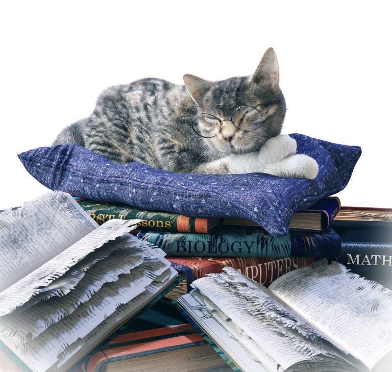 Η γάτα επιστημόνων και τα γρατσουνισμένα σχολικά βιβλία αστείες απομονώνουν τη σύνθεση στοκ φωτογραφίες