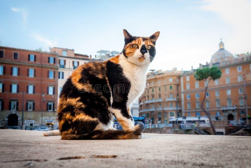 Η γάτα ζει κοντά Largo Di Torre Αργεντινή, Ρώμη, Ιταλία στοκ φωτογραφία
