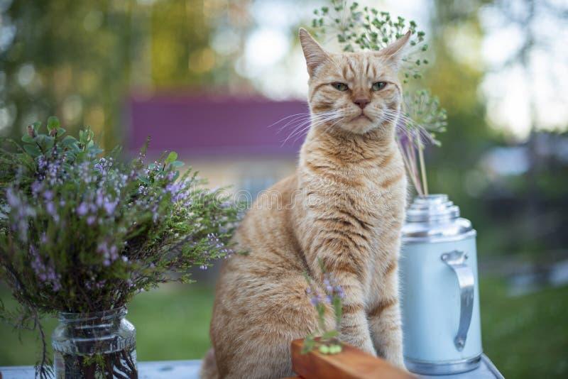 Η γάτα κάθεται κοντά στα λουλούδια στην οδό στοκ φωτογραφίες