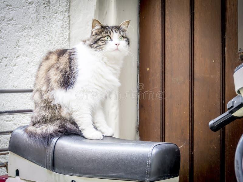 Η γάτα κάθεται στη μοτοσικλέτα στοκ φωτογραφίες