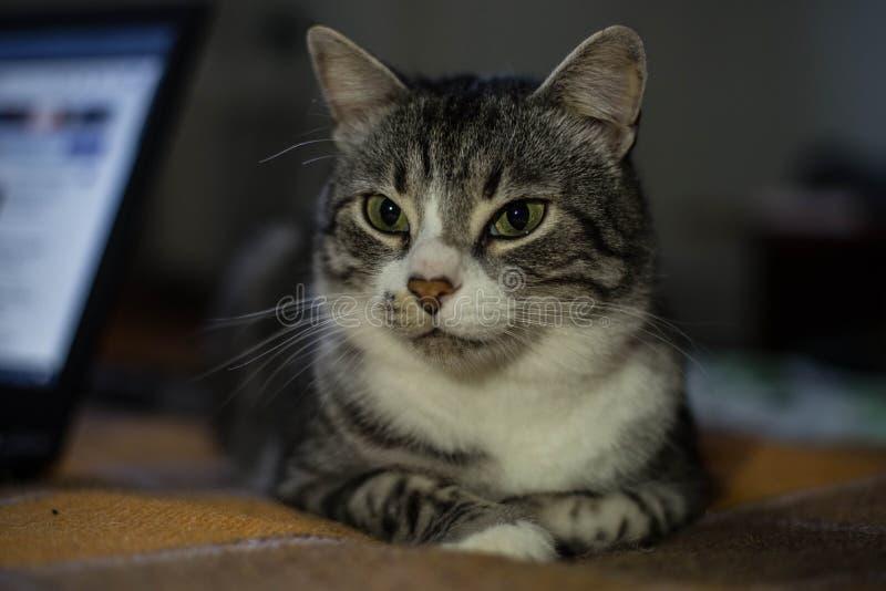 Η γάτα κάθεται στο κρεβάτι στοκ φωτογραφίες με δικαίωμα ελεύθερης χρήσης
