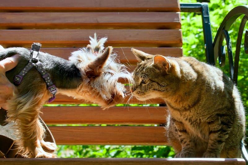 Η γάτα και το σκυλί κοιτάζουν επίμονα η μια στην άλλη στοκ φωτογραφία