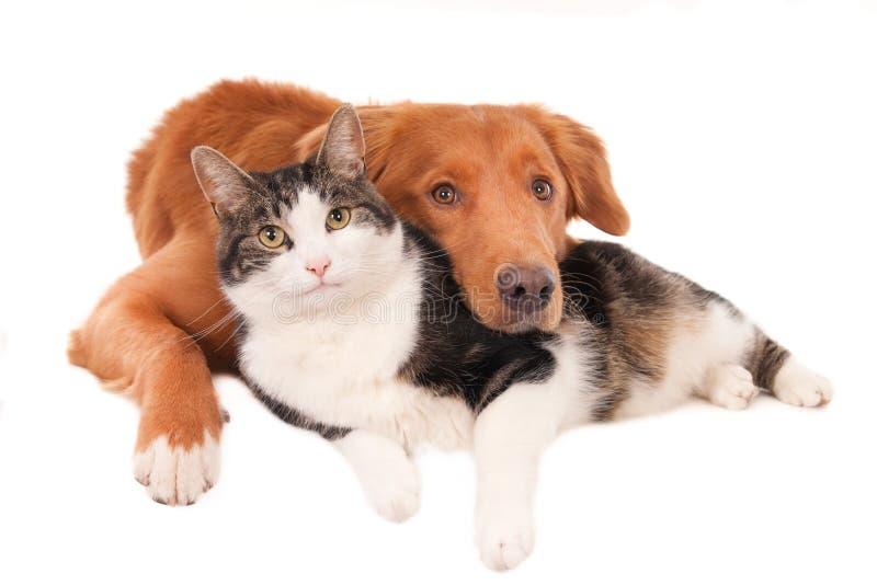 Η γάτα και το σκυλί σε έναν οικείο θέτουν, απομονωμένος στο λευκό στοκ εικόνες με δικαίωμα ελεύθερης χρήσης