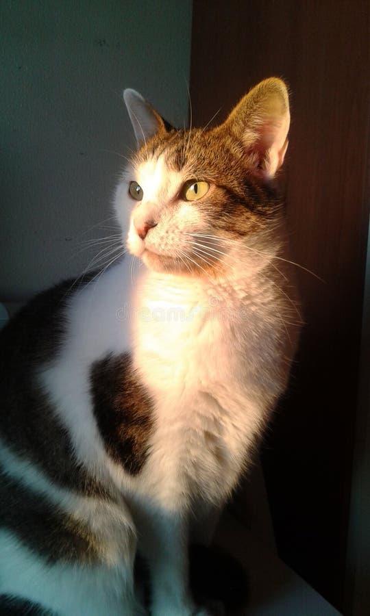 Η γάτα και το φως του ήλιου μου στοκ φωτογραφία με δικαίωμα ελεύθερης χρήσης