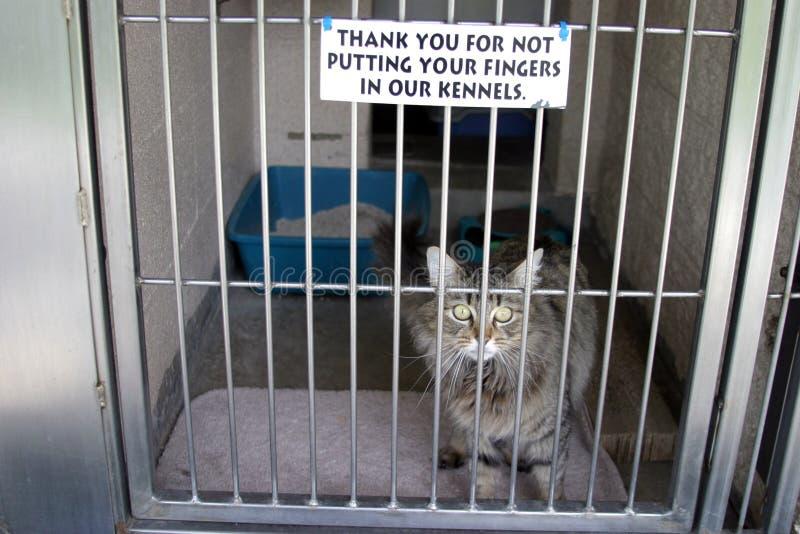 η γάτα κλουβιών της κάθεται στοκ φωτογραφία