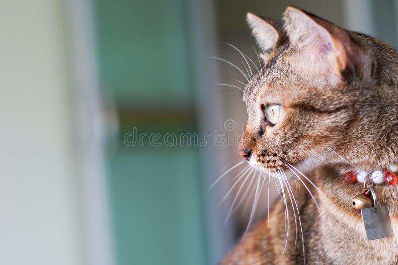 Η γάτα κοιτάζει επίμονα την ταχυδρόμηση στοκ εικόνα