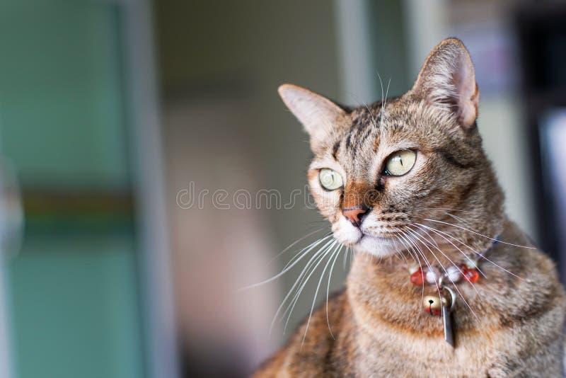 Η γάτα κοιτάζει επίμονα την ταχυδρόμηση στοκ εικόνες
