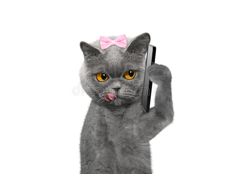 Η γάτα μιλά πέρα από τον κινητό -- στο λευκό στοκ εικόνα