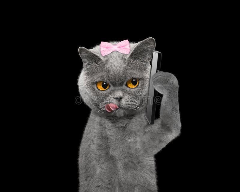 Η γάτα μιλά πέρα από τον κινητό -- στο Μαύρο στοκ εικόνες