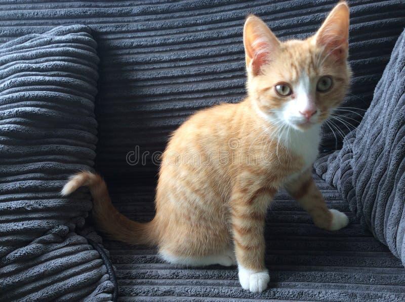 Η γάτα μου ως γατάκι στοκ εικόνα με δικαίωμα ελεύθερης χρήσης