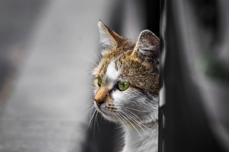 Η γάτα οδών κάτω από το αυτοκίνητο κοιτάζει έξω στην οδό σε αναζήτηση κάτι στοκ φωτογραφία
