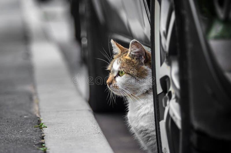 Η γάτα οδών κάτω από το αυτοκίνητο κοιτάζει έξω στην οδό σε αναζήτηση κάτι στοκ φωτογραφίες με δικαίωμα ελεύθερης χρήσης