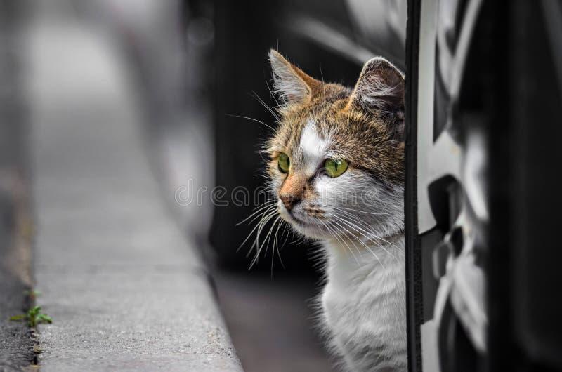 Η γάτα οδών κάτω από το αυτοκίνητο κοιτάζει έξω στην οδό στοκ εικόνα