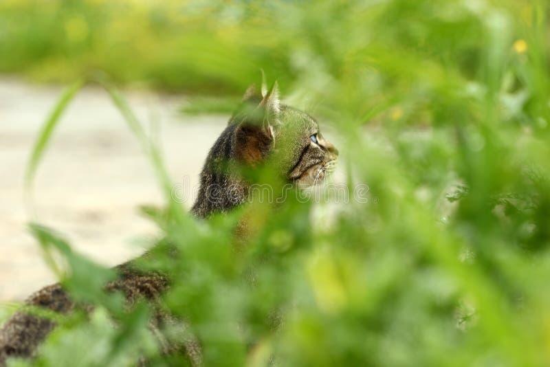 Η γάτα οδών κυνηγά κάτι στοκ εικόνες με δικαίωμα ελεύθερης χρήσης