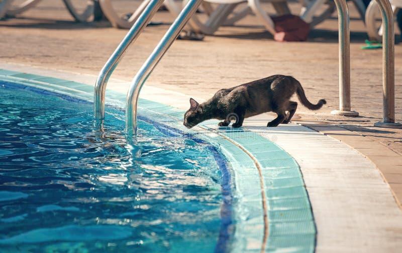 Η γάτα πίνει το νερό στοκ φωτογραφίες