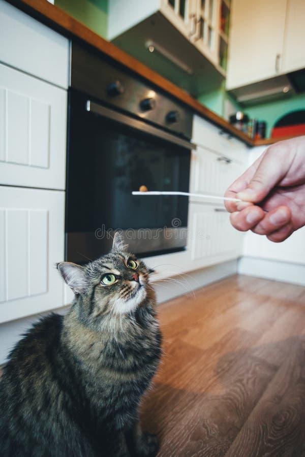 Η γάτα παίρνει ένα χάπι στοκ εικόνες