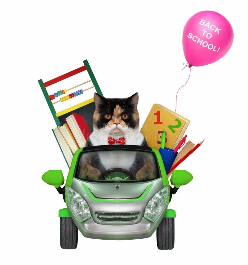 Η γάτα πηγαίνει στο σχολείο με το αυτοκίνητο στοκ φωτογραφία με δικαίωμα ελεύθερης χρήσης