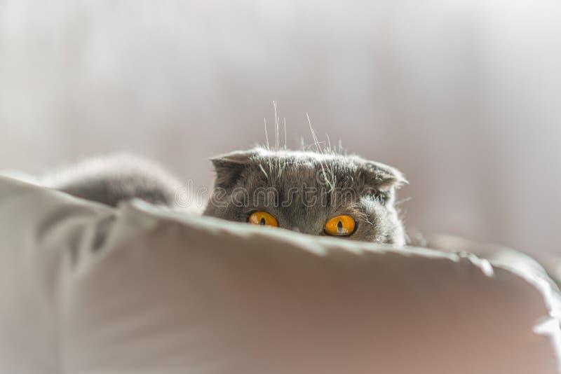 Η γάτα που εξετάζει σας από το είναι κρεβάτι στοκ φωτογραφία