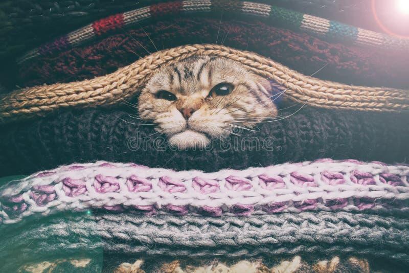 Η γάτα προετοιμάζεται για το χειμώναη στοκ εικόνες