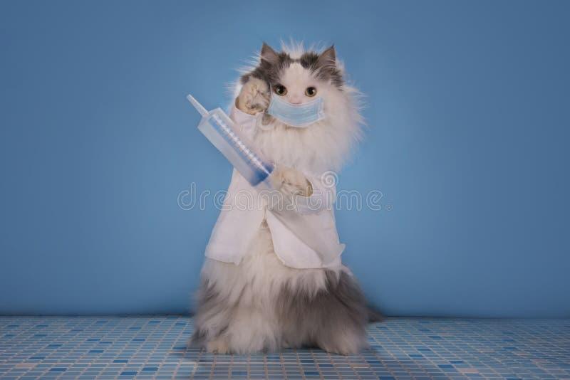 Η γάτα σε έναν γιατρό κοστουμιών λέει πώς να εξετάσει την επιδημία του infl στοκ φωτογραφία