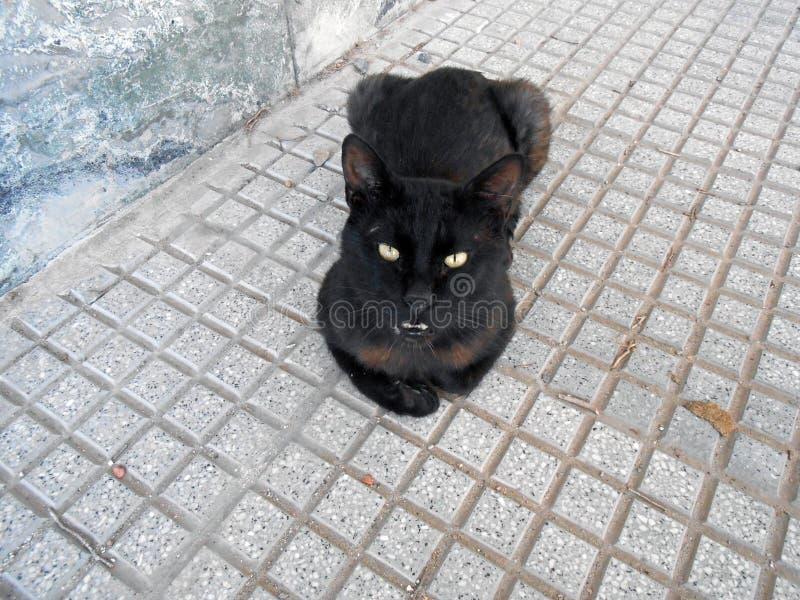 Η γάτα στήριξης στοκ φωτογραφία με δικαίωμα ελεύθερης χρήσης