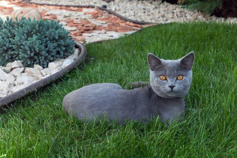 Η γάτα στον πράσινο κήπο στοκ φωτογραφίες με δικαίωμα ελεύθερης χρήσης