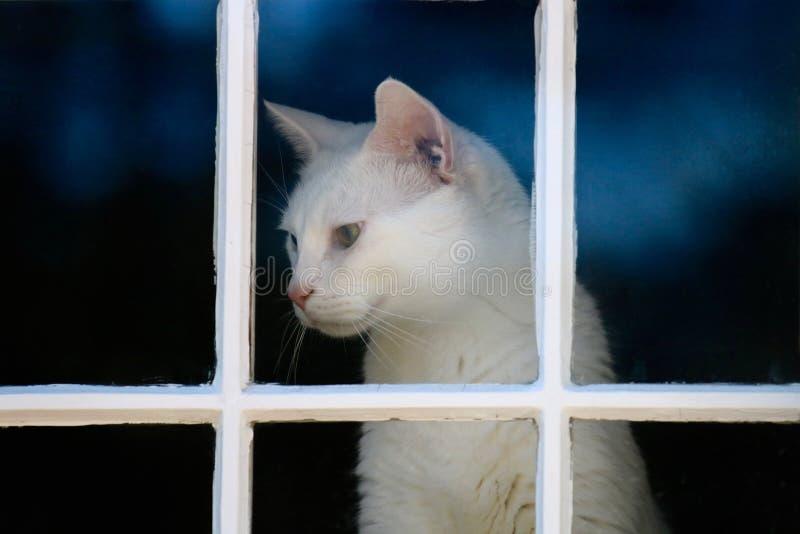 Η γάτα στο παράθυρο στοκ φωτογραφία με δικαίωμα ελεύθερης χρήσης