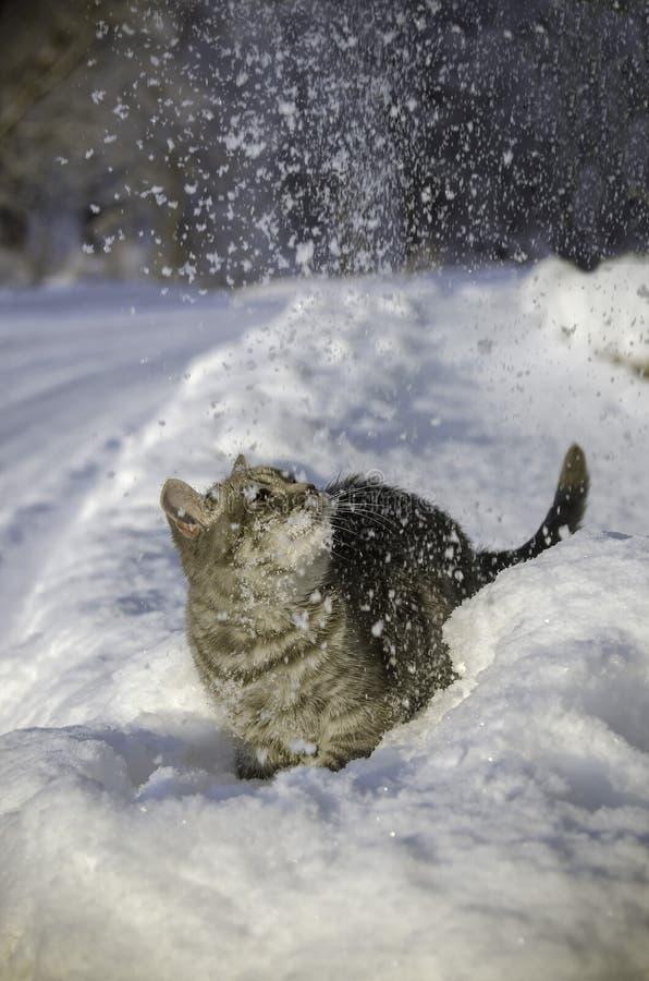 Η γάτα στο χιόνι είναι snowdrift στοκ εικόνες