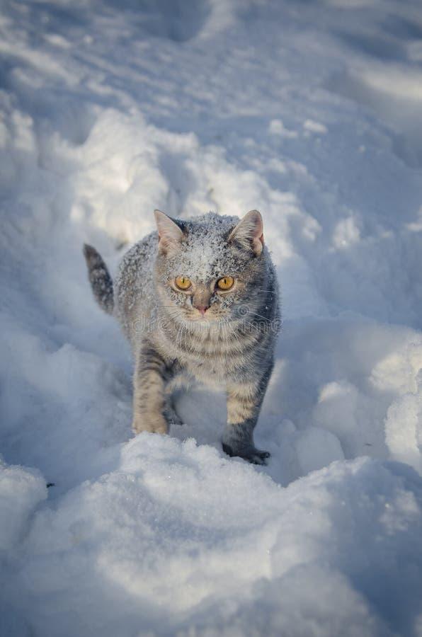 Η γάτα στο χιόνι είναι snowdrift στοκ εικόνα με δικαίωμα ελεύθερης χρήσης