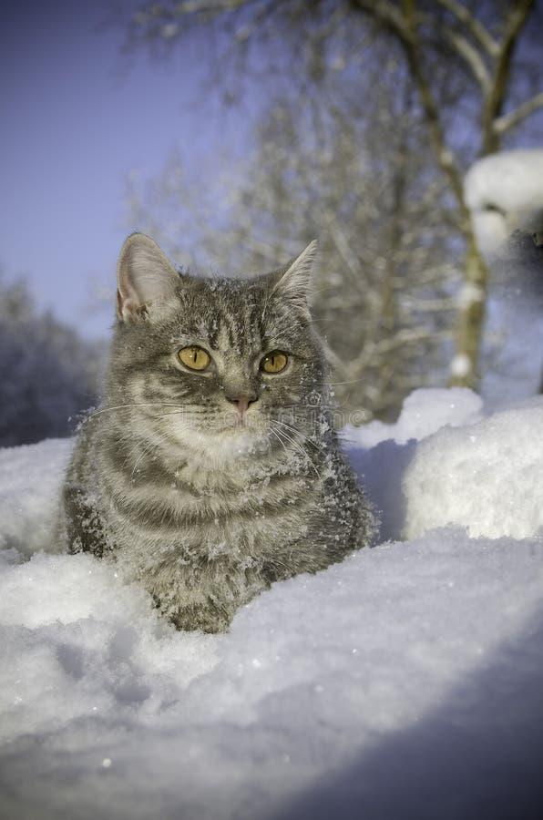 Η γάτα στο χιόνι είναι snowdrift στοκ φωτογραφία με δικαίωμα ελεύθερης χρήσης