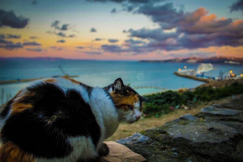 Η γάτα του Μαρόκου ελεύθερη απεικόνιση δικαιώματος