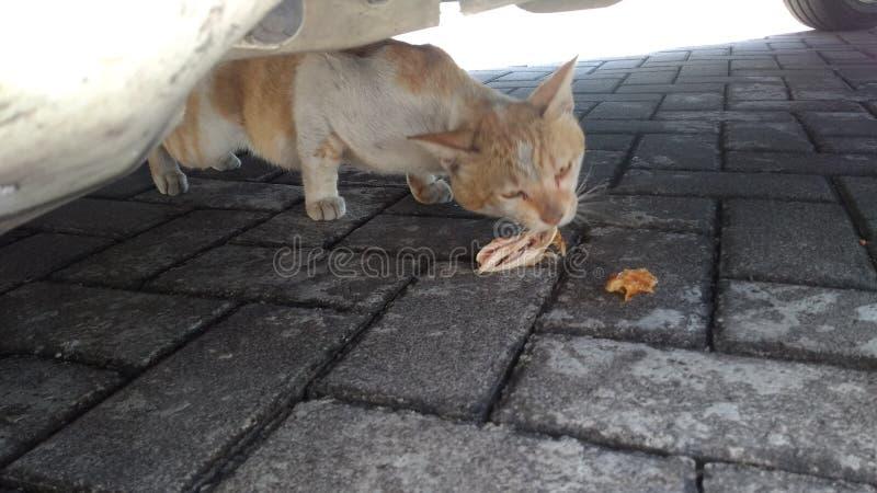 Η γάτα τρώει στοκ φωτογραφία με δικαίωμα ελεύθερης χρήσης