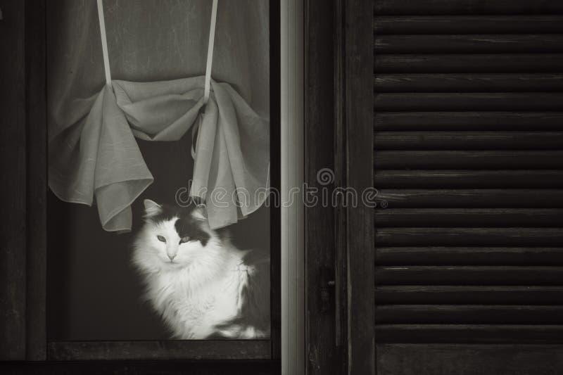 Η γάτα χαλαρώνει μέσα στοκ φωτογραφίες