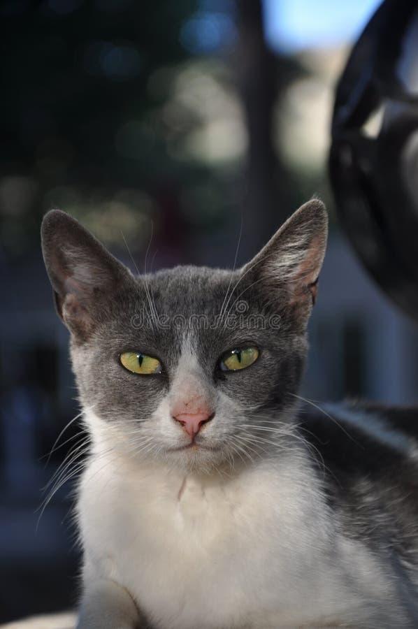 Η γάτα στοκ εικόνα