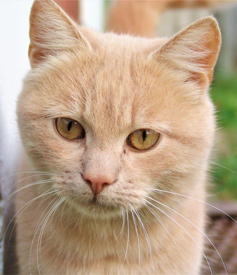 Η γάτα ` s κοιτάζει στοκ εικόνα με δικαίωμα ελεύθερης χρήσης