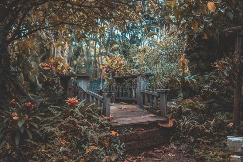 Η γέφυρα δέντρων στοκ εικόνες