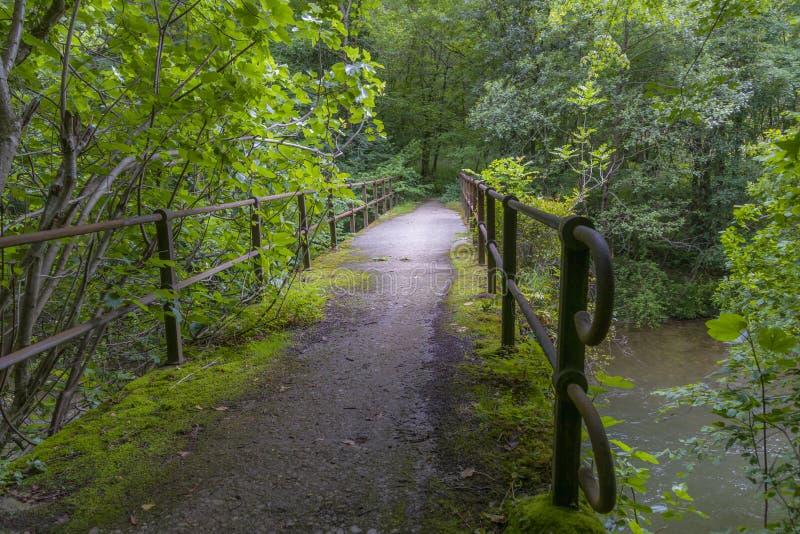 Η γέφυρα κρυμμένη σε ένα βαθύ δάσος στοκ φωτογραφία
