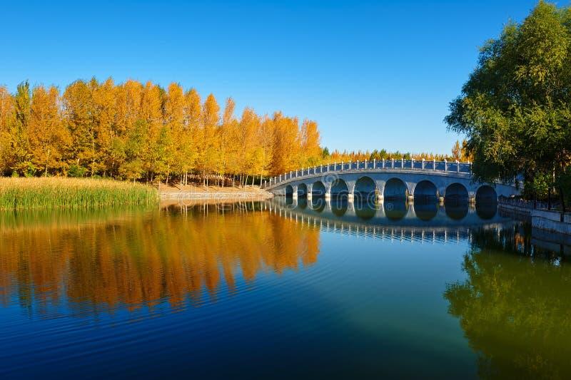 Η γέφυρα κύκλων και τα φθινοπωρινά δέντρα στοκ εικόνα