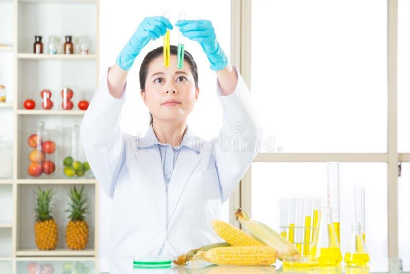 Η γενετική ζάχαρη καλαμποκιού τροποποίησης δεν είναι κάλαμος ζάχαρης στοκ εικόνες
