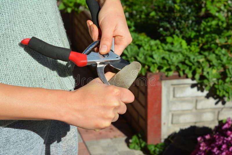 Η γυναίκα ακονίζει τις ψαλίδες περικοπής Καθαρίζοντας και ακονίζοντας κήπων εργαλεία κηπουρών στοκ εικόνα