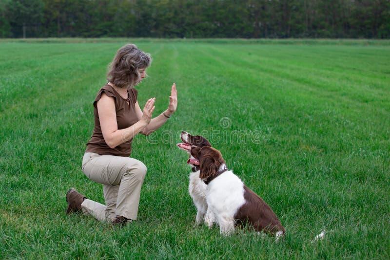 Η γυναίκα εκπαιδεύει τα σκυλιά τα σκυλιά παραμένουν καθισμένα μέχρι την εντολή στοκ φωτογραφίες με δικαίωμα ελεύθερης χρήσης