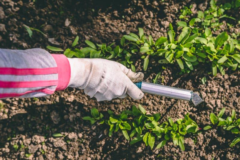 Η γυναίκα παραδίδει τα γάντια και η σκαπάνη μεταχειρίζεται τις εγκαταστάσεις στον κήπο στοκ εικόνες