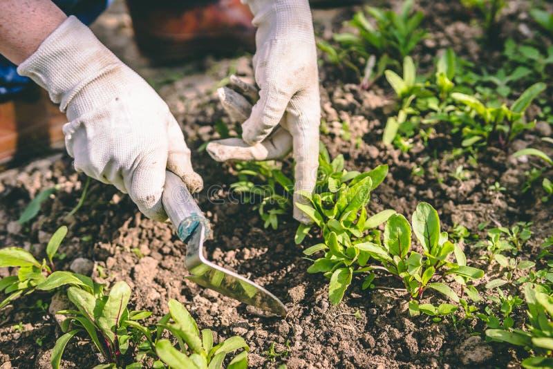 Η γυναίκα παραδίδει τα γάντια και η σκαπάνη μεταχειρίζεται τις εγκαταστάσεις στον κήπο στοκ εικόνα με δικαίωμα ελεύθερης χρήσης