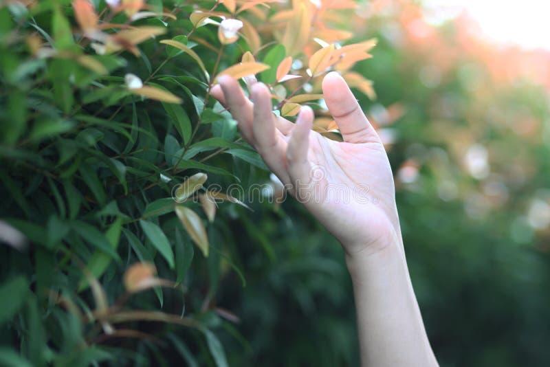 Η γυναίκα της Ασίας παραδίδει την ελαφριά φύση στοκ εικόνες