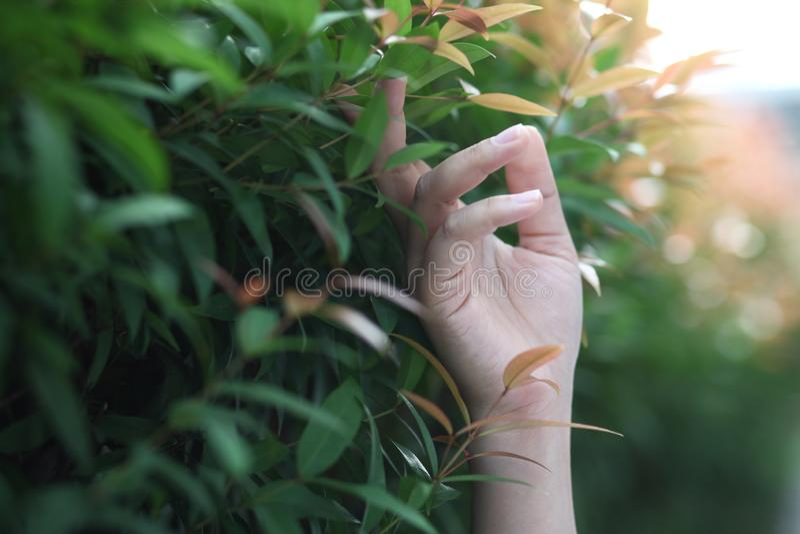 Η γυναίκα της Ασίας παραδίδει την ελαφριά φύση στοκ εικόνα με δικαίωμα ελεύθερης χρήσης