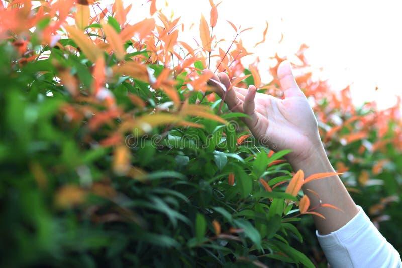 Η γυναίκα της Ασίας παραδίδει την ελαφριά φύση στοκ εικόνα